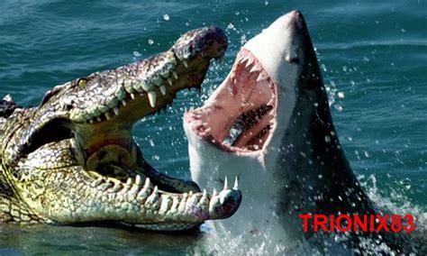 imagenes leones vs tiburones cocodrilo vs tiburon las mejores batallas de animales