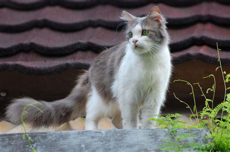 Wallpaper Kucing Cantik | kuce projekti seotoolnet com