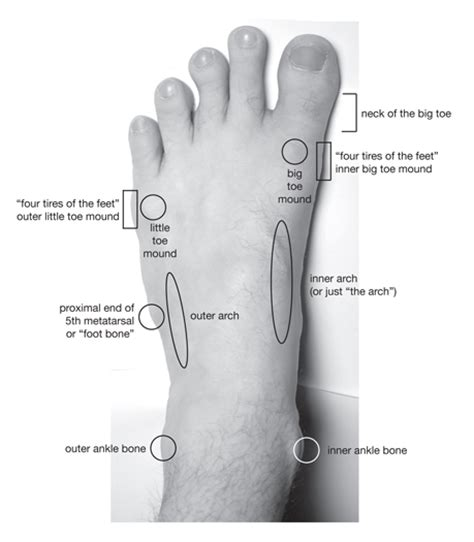 toe diagram diagram of the foot diagram site