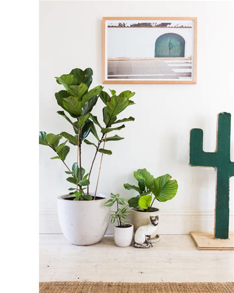 Plant Home Decor by Decordots Grouping House Plants