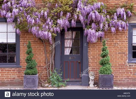 climbing plants for front of house front door with purple flowered wisteria house front