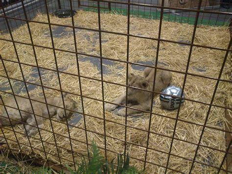 muebles los leones valencia comprar ofertas platos de ducha muebles sofas spain
