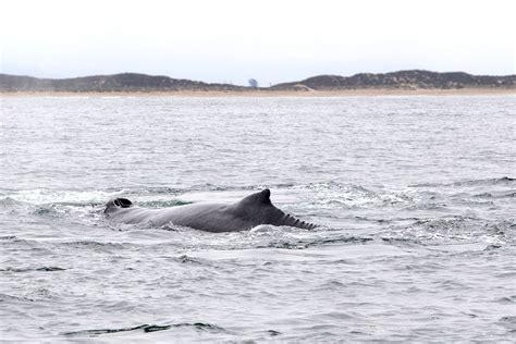 dream boat streaming california dreamin day 2 whale watching february stars