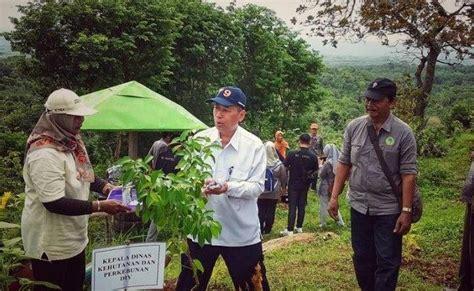 Bibit Sengon Bantul ipkindo diy tanam 2200 bibit pohon di kawasan wisata bukit