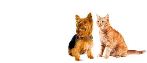 pet dogs images jetblue pets