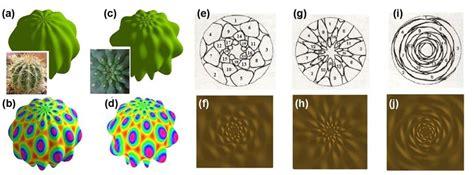 observed pattern in nature patrick shipman patrick d shipman patrick daniel