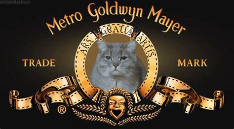 lion film intro mgm cat tumblr