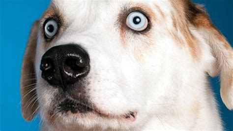 they re dogs brent a superbowl ad for dogs brent gizmodo australia