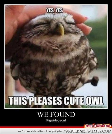 Mugglenet Memes Com - this is an owl harry potter d pinterest