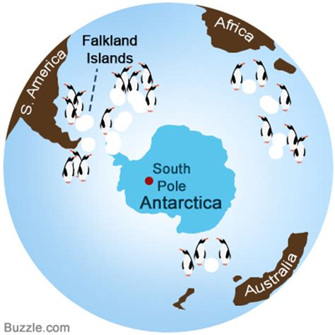 where do penguins live map facts about gentoo penguins that will leave you dumbfounded