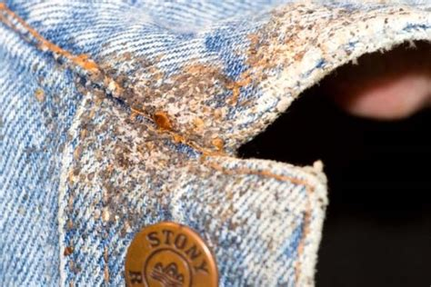 how long can bed bugs live on clothes bed bug eradication while we donu0027t suggest you live in fear of bed bugs we do