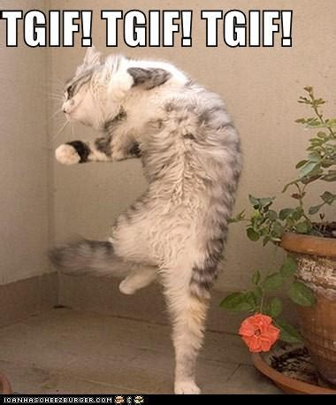 Funny Tgif Memes - the tgif cat