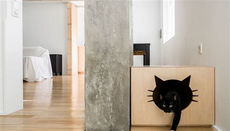 gatto in appartamento appartamento con gatto di miguel marcelino livegreenblog