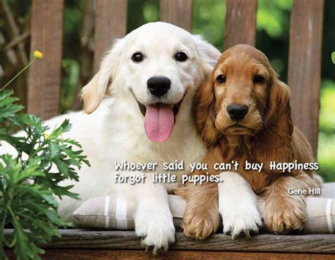 where to buy puppy 43 best images about dogs quot s best friend quot on best friends
