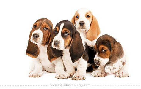 different breeds of puppies what 17 different breeds of dogs look like at 6 weeks 171 twistedsifter