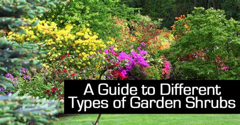 types of garden bushes a guide to different types of garden shrubs