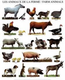 Bos Barn World Animal Farm Animals