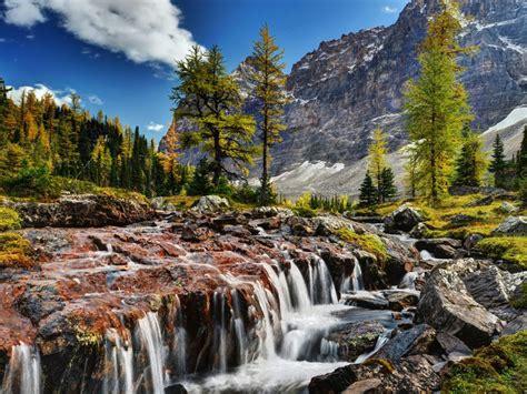 beautiful scenery mountain river rocks rocky mountain pine