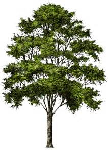 tree image free tree png image free picture