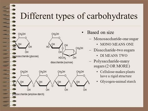 8 types of carbohydrates what are the four types of biomolecules ppt