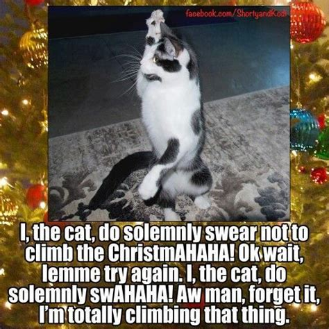 Christmas Cat Meme - 25 best cat memes images on pinterest funny kitties