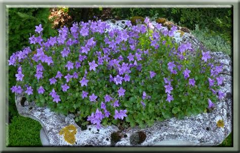 hele mooi bloemen g 233 rard s tuin