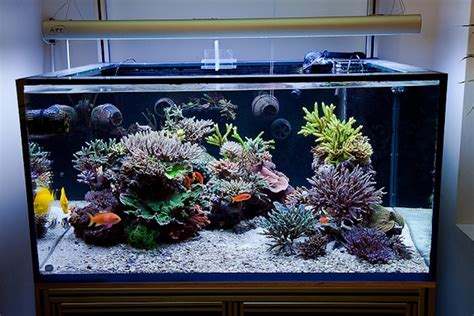Marine Aquarium Aquascaping by Aesthetics Of Aquascaping I Reefs