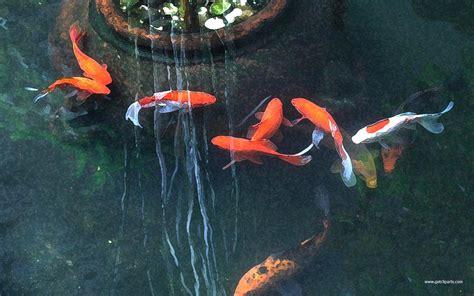 fish painting 1511531