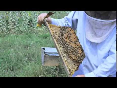 top bar beekeeping les crowder vidoemo emotional video unity