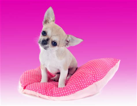 Barker Beds Pretty In Pink Dog Beds