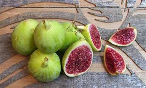 best fig figs the cropper from the tree of 187 spain info