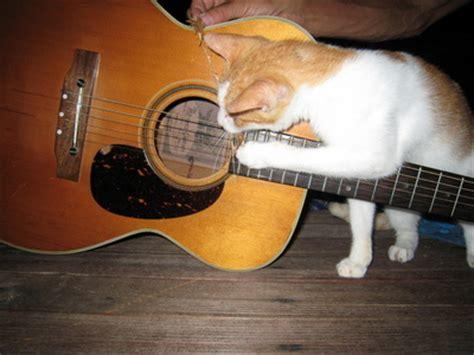 cat guitar wallpaper cat playing guitar hot girls wallpaper