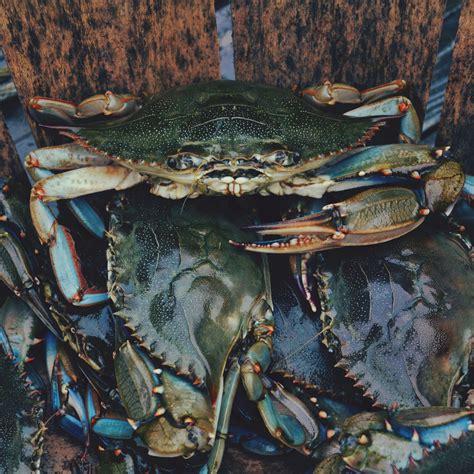 Mackeys Crab House by Conrad S Crabs Seafood Market Restaurant Maryland