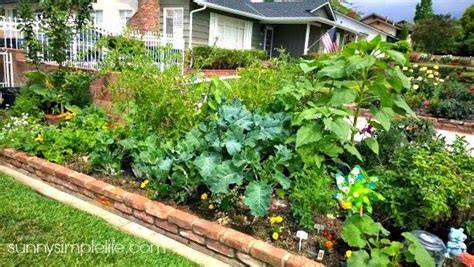 City Vegetable Garden 17 Best Images About Edible Landscaping On