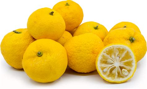 fruit usernames yuzu limes information recipes and facts