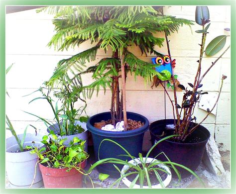 poisonous house plants for dogs non toxic house plants for children cats and dogs