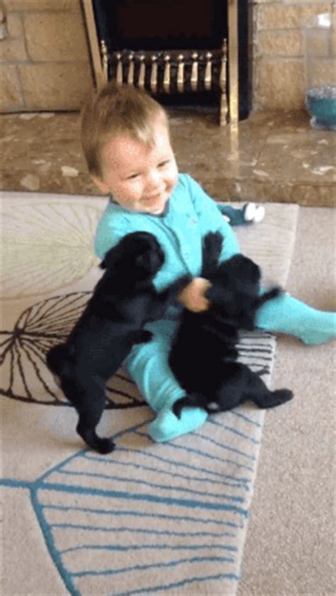 pug attacks baby tastefully offensive on pug puppies adorably attack baby