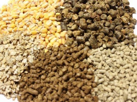 Tropical Plants Ireland - animal feed