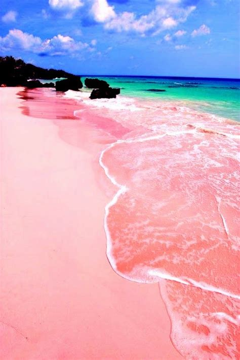 beaches with pink sand pink sand beach bermuda travel pinterest pink sand