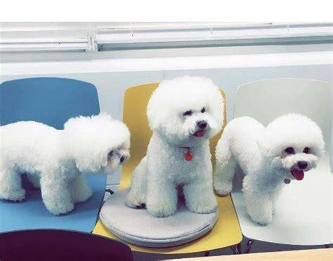 Kaos Kaki Hewan Peliharaan Anjing Kucing Lucu 1 sayang hewan anjing anjing song hye kyo punya nama lucu kapanlagi