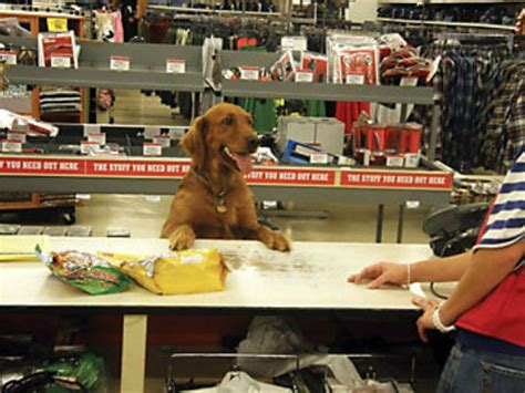 puppy tractor supply 1000 images about retail stores that allow dogs on retail stores lush