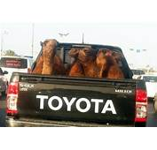 Toyota Pets – We Want To Hear From You