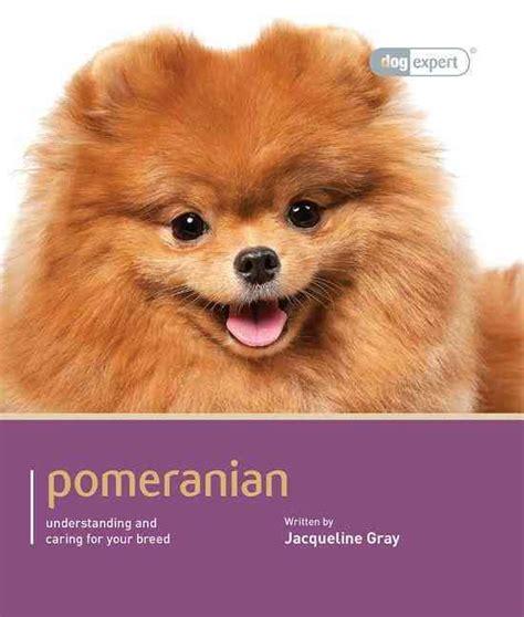 pomeranian care meer dan 1000 idee 235 n theekopje pomeranian puppy op theekopje