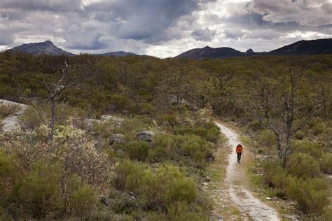 el camino de las 8425340446 el camino de las raices