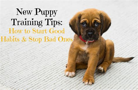 new puppy tips image gallery new puppy tips
