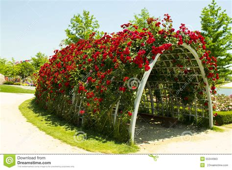 Garden Arbor Tunnel Roses Tunnel Stock Image Image Of Vacation Beautiful