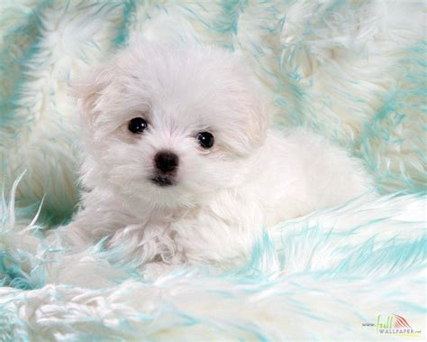 baby puppy wallpaper baby wallpapers wallpaper cave