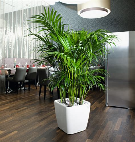 Lechuza Planters Canada by Tropical Office Plant Interior Containers Air Strength