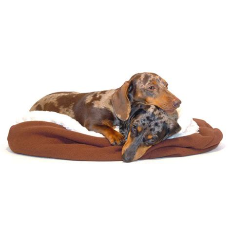 dachshund bed dachshund bed 28 images dachshund dog beds dachshund