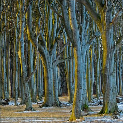 nienhagen wood alemanha haunted forest forests and germany on pinterest